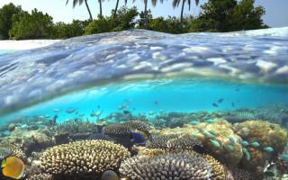 Tropisches Riff - Malediven